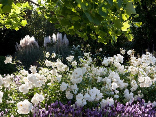 To compliment these summer happy perennial bloomer keep shrubs, such as roses, happy throughout the warm months for a show of flowers all season long. It is a simple task with the big reward that takes a mild effort every couple of months.