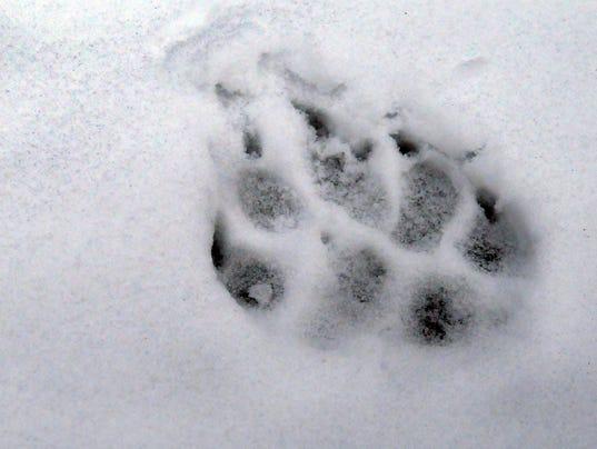 636136910492375973-Wilderness-Wolves-Davi-1-.jpg