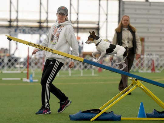 Lorraine McCay, of Mullica Township, N.J., runs through the agility training with her rat terrier, Darla during the all-terrier agility show held in South Londonderry Township at In The Net on Tuesday morning, Oct. 4. All breeds of terriers were on displaying agility, obedience and other attributes.