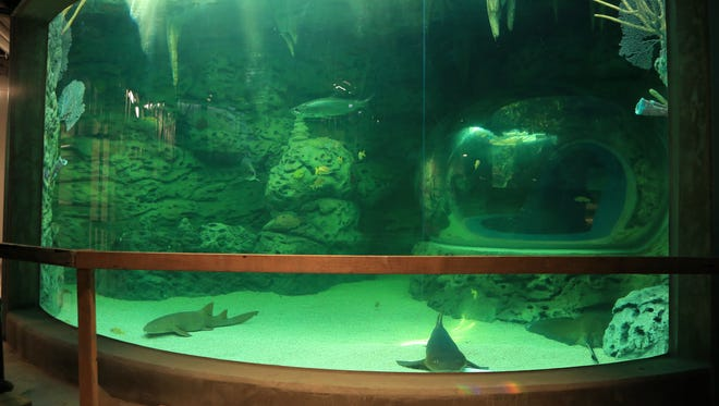 Sharks and other fish swim in an exhibit at the Texas State Aquarium's Caribbean Journey expansion. The $56 million expansion includes a 65,000-square-foot, four-story addition that includes a science, technology, engineering and math education center. The grand opening is May 13.(3/23/17)