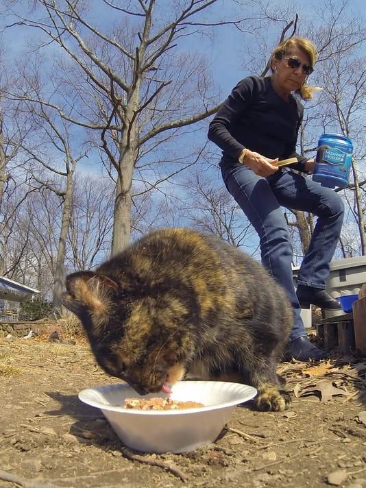 Cat rescuers