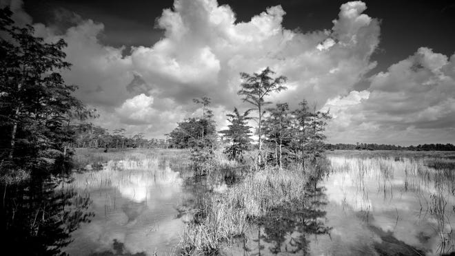 Big Cypress National Preserve as photographed by Clyde Butcher.