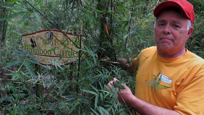 """Danny Doege pulls away some of the bamboo to display the """"Boo For You"""" Bamboo Garden sign dedicated to his late wife Peggy. The bamboo garden run by Doege features over 400 different varieties of bamboo for sale."""
