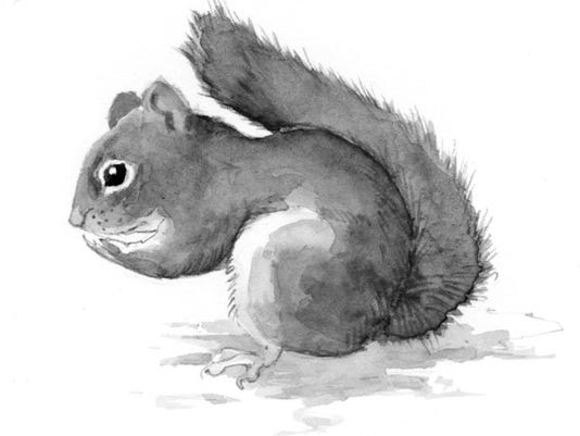 TOS_squirrel.jpg