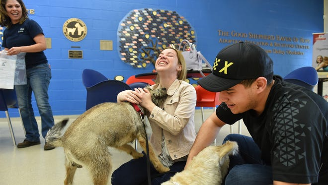 Jolyann Torres, 22, (center) and her fiancée Godwin Ghigliotty (right,) both from Orlando, celebrate with their dogs Red (left), and Lolo, after being reunited at the Humane Society of Vero Beach and Indian River County on Sunday, Jan. 28, 2018, as Maria Ramirez (left), director of operations, stands by. The couple were separated from their animals for three months after evacuating their home in Puerto Rico after Hurricane Maria hit in September 2017.  Thirty dogs, including Red and Lolo were flown from Puerto Rico to Vero Beach to be reunited with their families. CQ Jolyann Torres, Godwin Ghigliotty, Lolo, Red