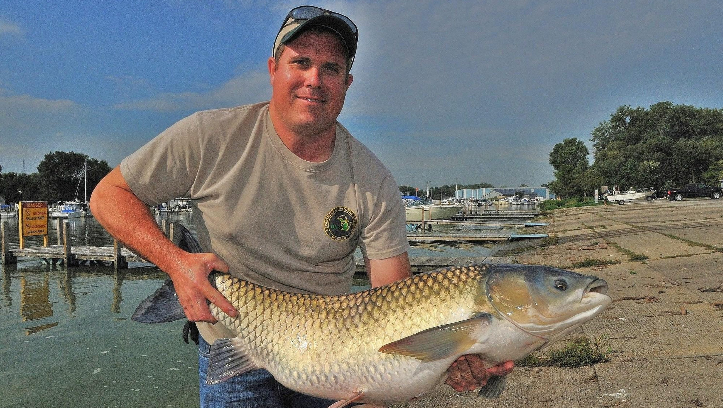 Searching for truth about asian carp in the great lakes for Carp fish pictures