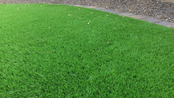 Artificial grass in the shade is cool and soft, but