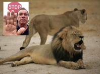 """Actor and former governor of California Arnold Schwarzenegger told his Facebook followers it's """"ballsy to join the military -- not kill big cats."""""""