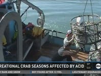 Recreational crab season affected by acid