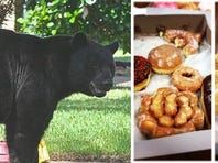 Just Snacking! Black Bear Caught Mid-Meal In Ga. Work Truck