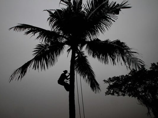 India Coconut Trees Demoted