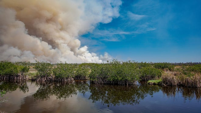 Billowing smoke is seen at Picayune Strand State Forest on Monday, March 5, 2018. The 78,000-acre forest is the fourth-largest state forest in Florida and sits about 2 miles east of Naples.