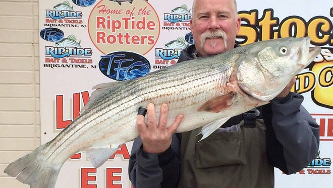 """Mark Hansen weighed in a 39.25"""" striper that weighed 18 lbs., and put him in 2nd place in the Riptide Spring Striper/Bluefish Tournament that continues until May 22. He caught the fish in the middle of Brigantine."""