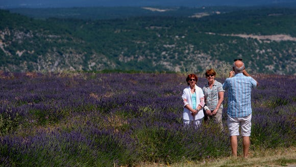Traveling the lavender trail.