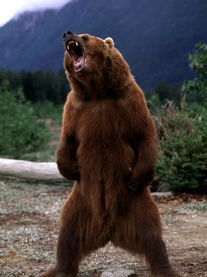 Bear tracks: Wall Street is on alert for signs that the next bear market may be getting closer.  (AP Photo/Galen Rowell, File)