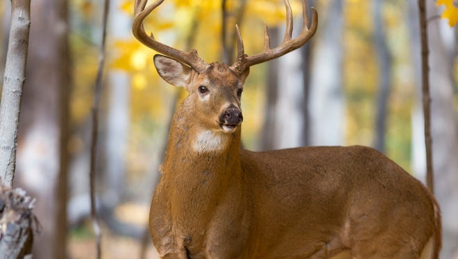 Deer hunters in Kentucky are encouraged to take part in a survey.