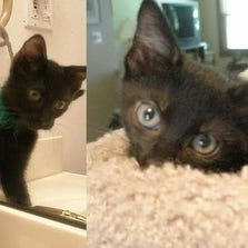 SEPT. 2 – Kale and Kiwi are available for adoption through Helping Strays in Monroe County, Ill.