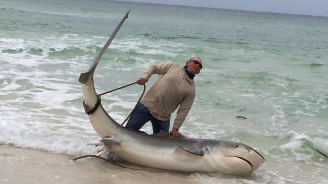 Earnie Polk caught a tiger shark, which he later released.