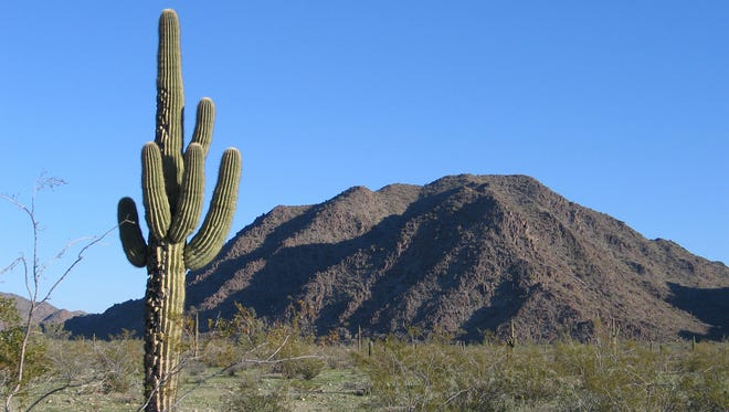 The North Maricopa Mountains Wilderness, about 35 miles southwest of downtown Phoenix, holds a parklike landscape of saguaro, creosote and other desert plants.