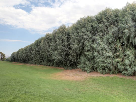 A row of tall tamarisk trees separates the Crossley Tracts neighborhood from the city-owned Tahquitz Creek Golf Course.