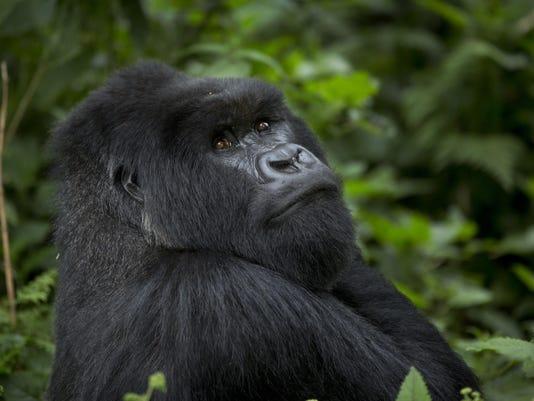 Primates Extinction
