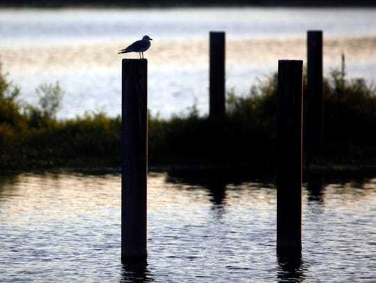 A bird sits perched on a post in this file photo taken at Acton Lake in Hueston Woods State Park in Oxford.