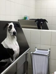 "PetPeople's ""Spaw"" self-service dog wash provides the"