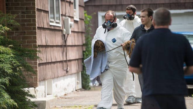 Members of Broome County Human Society removed 22 sick dogs and one cat from the basement of 310 Beckwith Ave. in Endicott on Thursday.