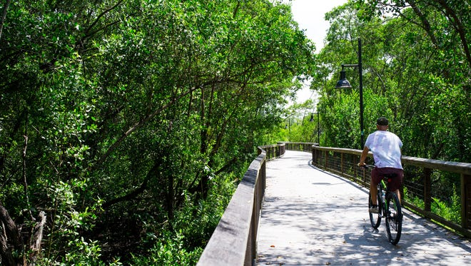 """A man rides a bike along the boardwalk at the Gordon River Greenway in Naples on Thursday, Aug. 25, 2016. Leaders with the Conservancy of Southwest Florida and other attractions, such as the Gordon River Greenway and the Naples Zoo, along with others including the Naples airport director, are working together to get a """"green district"""" designation that they hope will help send a unified message about the green offerings for visitors in Naples."""