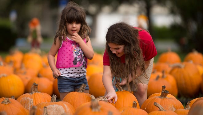 Alexis Diciurcio, 4, left and her sister Jessica Diciurcio, 10, both of Port St. Lucie, look for the perfect pumpkins at the First United Methodist Church's Pumpkin Patch in Port St. Lucie. This image was taken in Oct. 2015.