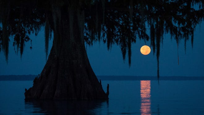 The moon is seen during a November photography tour and workshop in the Atchafalaya Basin. The first tour was so successful that organizers are planning more for 2017.