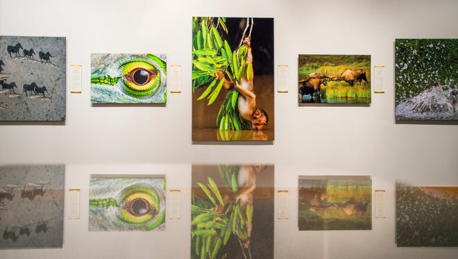 Roberson Museum Executive Director Terry McDonald worked for nine years to bring  Nature's Best Photography exhibit to Binghamton.