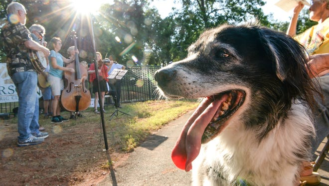 Henry, a 15-year-old border collie mix who belongs to Heidi Wolko of Anderson, sits near The Speight Band playing the Dog Park Serenade, during the dedication and ribbon cutting of the dog park in Anderson on Wednesday.