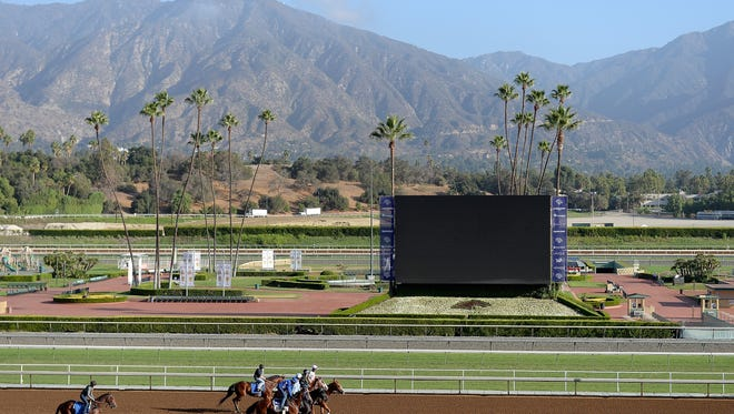 ARCADIA, CA - OCTOBER 27:  Horses are led to the track to train in preparation for the 2014 Breeder's Cup at Santa Anita Park on October 27, 2014 in Arcadia, California.  (Photo by Harry How/Getty Images)