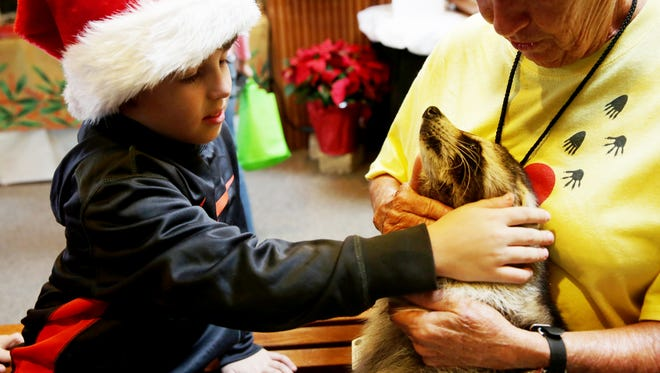 Sean Longo, 8, of Naples, pets Trouper the blind raccoon during Preserving the Holiday Spirit at The Naples Preserve on Friday, Dec. 9, 2016.