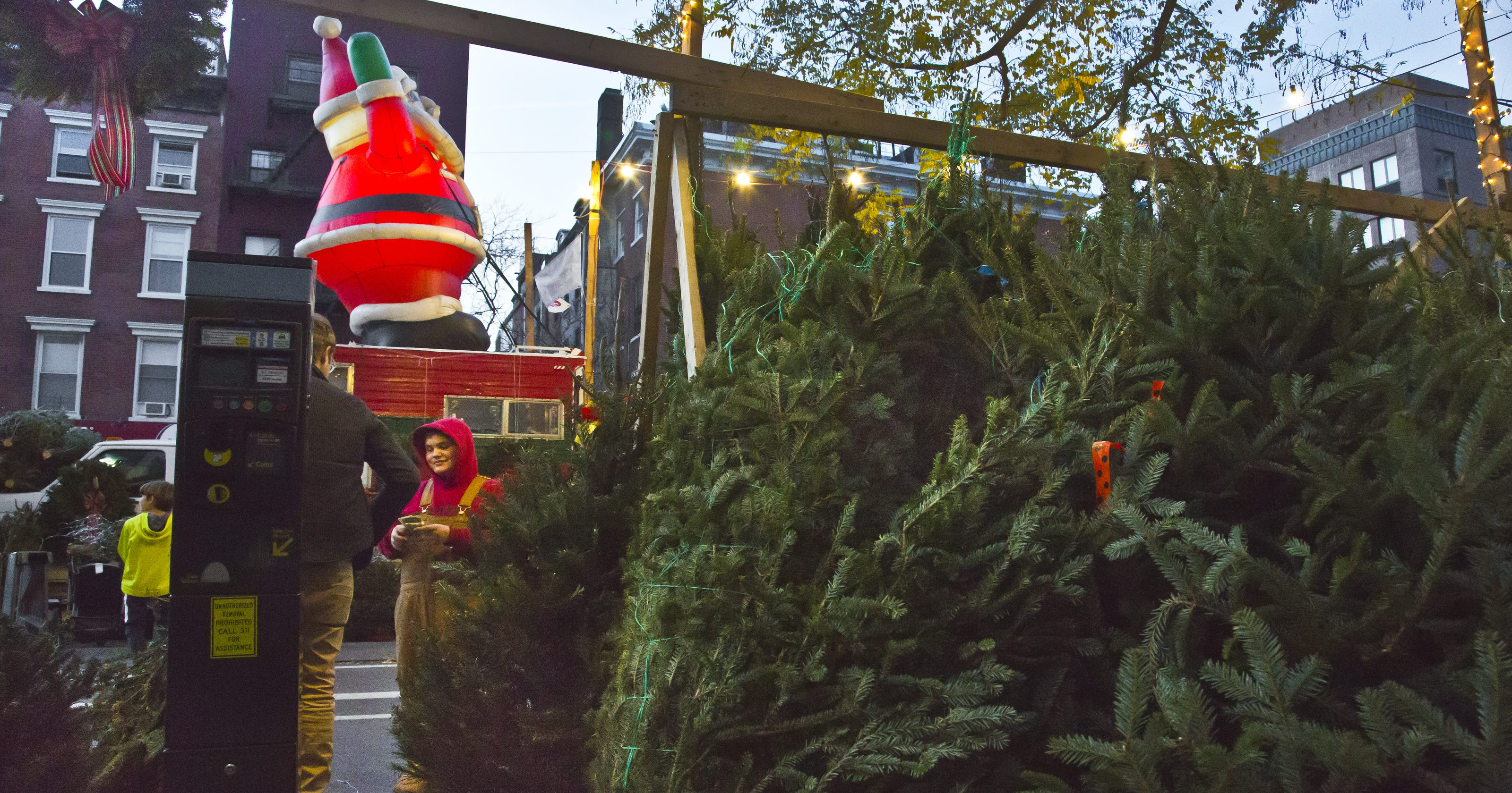 Christmas Tree Shortage.National Christmas Tree Shortage Not An Issue In New York