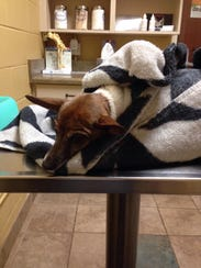Dana Morse's dog Meagan Fox died from a gunshot wound.