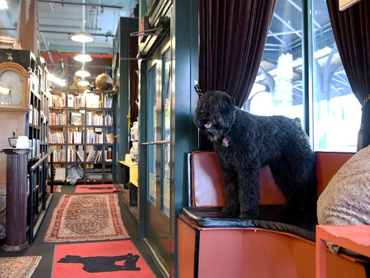 Corky, Bouvier des Flandres, hangs out at the Battery