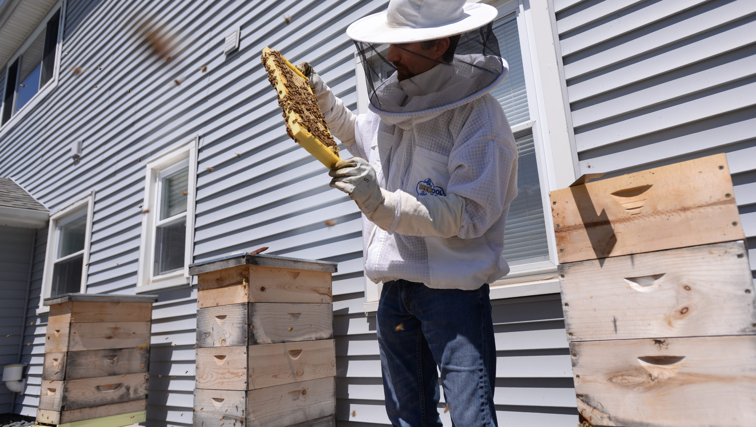 michigan beekeepers fight to keep hives in backyard