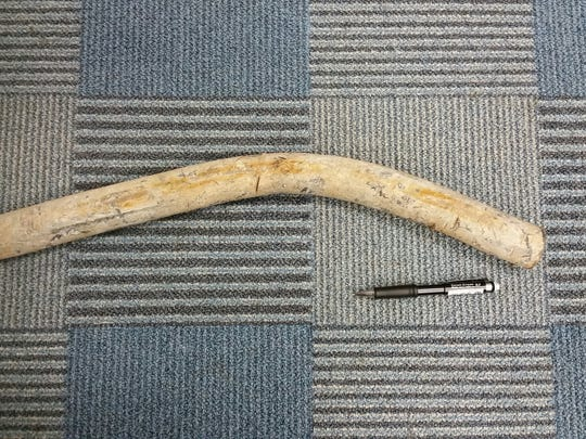 Asheville officials removed this lead pipe that once was part of a city drinking water service line.