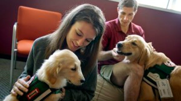 In this May 2, 2012 photo, law students Josh Richey, 22, right, and Lindsay Stewart, 26, play with Hooch, a 19-month-old golden retriever, right, and Stanley, a 4-month-old golden retriever, in between final exams at Emory University in Atlanta. Emory University is part of a small but growing number of schools that are going to the dogs, literally, to help stressed out students relax. From Kent State University in Ohio to Macalester College in Minnesota, colleges are bringing dogs on campus during exams, placing pups in counseling centers for students to visit regularly or allowing faculty and staff to bring their pets to campus to play with students. (AP Photo/David Goldman)