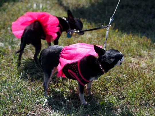 Bring your well-dressed pooches to DogFest on Saturday.