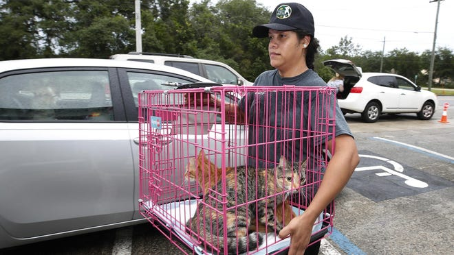 Volusia County Animal Services staff work during a free pet food giveaway as well as microchipping   pets at Volusia County Animal Services building, Saturday, June 6, 2020.