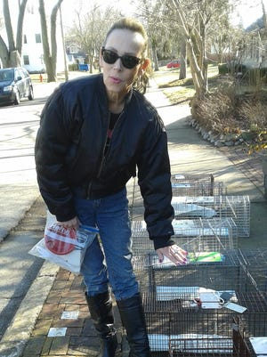 Cheryl Phillips lines up traps before moving them to the front porch of a home in Rochester.