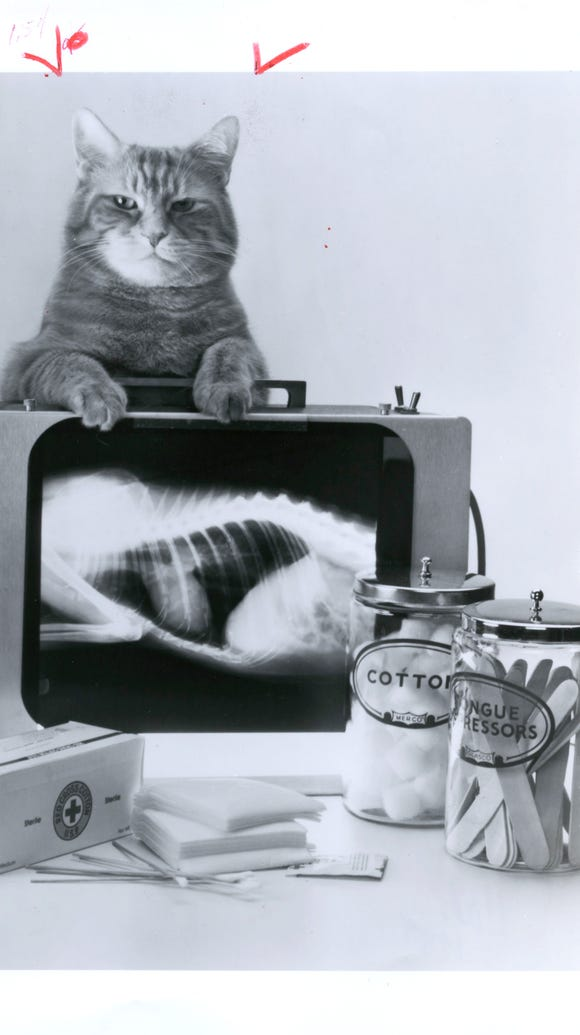 Photo illustration of a cat from 1989.