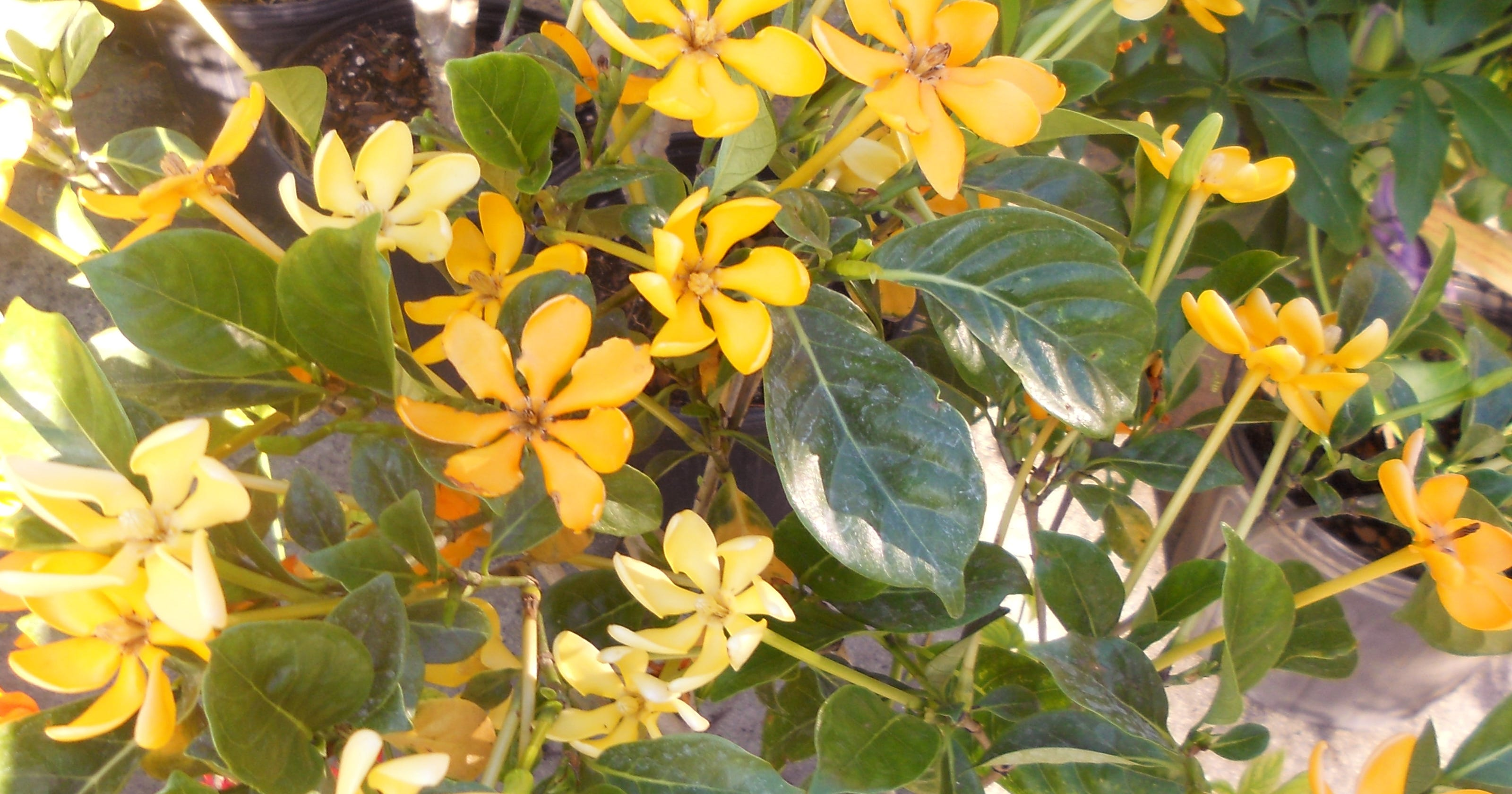 The Season For Fragrant Plants Approaches