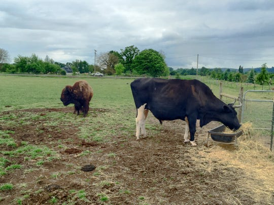 Helen, left, and Big Roy hang out at Lighthouse Farm Sanctuary in Scio.