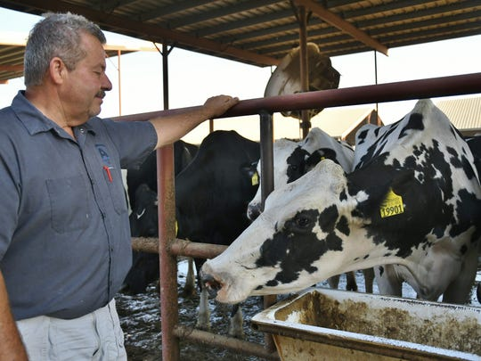 Airosa Dairy in Pixley milks roughly 2,900 cows. Owner