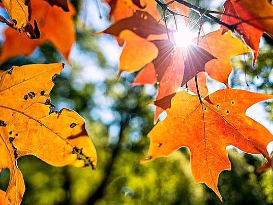636428022471008123-autumnleaves.jpg