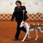 Gallery   Hattiesburg Dog Show